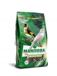 Manitoba high germination 2,5kg