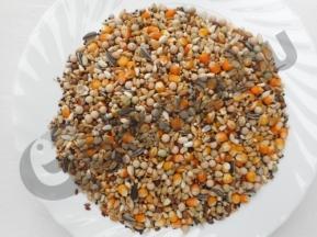 Manitoba galamb 903 25kg